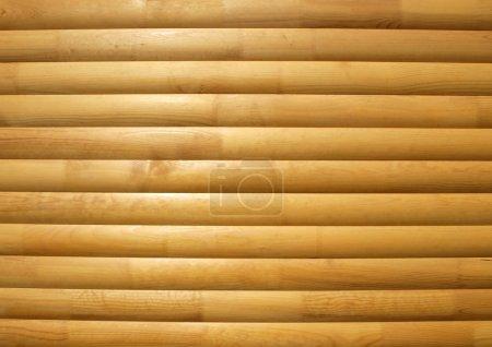 Photo pour Fond bois gros plan - image libre de droit