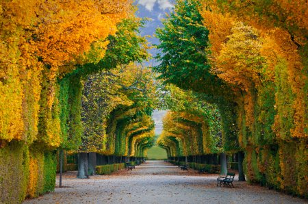 Photo for Long road in autumn park - Royalty Free Image