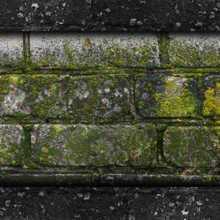 Photo pour Mousse vieux vert mur pierre motif moule gris texture fond brique de roche champignon - image libre de droit