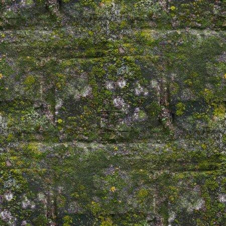 Photo pour Mousse sans couture vieux motif de pierre de mur vert moule texture grise fond brique de roche champignon - image libre de droit