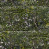 Bezešvé moss staré zelené zdi kamenné vzor plíseň Šedá textura bac