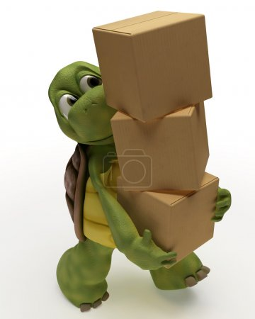 Tortoise with boxes