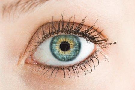 Photo pour Bel oeil bleu - image libre de droit