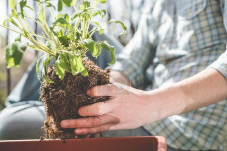 Man hands gardening