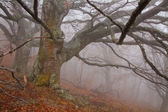 Old tree in fog in autumn