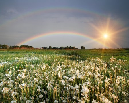 Rainbow over the field with flowers