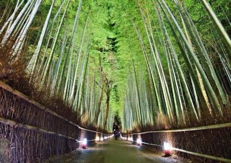Photo pour La forêt de bambou de kyoto, Japon. - image libre de droit