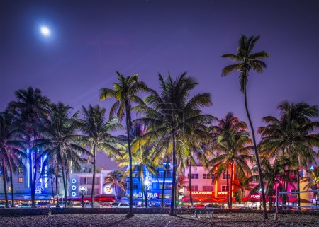 Photo for MIAMI, FLORIDA - JANUARY 6, 2014: Palm trees line Ocean Drive. The raod is the main thoroughfare through South Beach. - Royalty Free Image