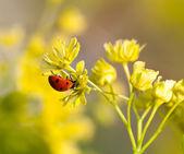 Beruška na květiny z lipového dřeva