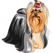 Постер, плакат: Vector pedigreed dog Yorkshire terrier