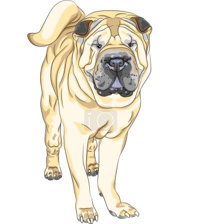 Vector sketch yellow gun dog breed Chinese Shar Pei