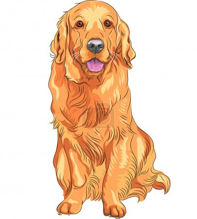 Vector sketch red gun dog breed Golden Retriever