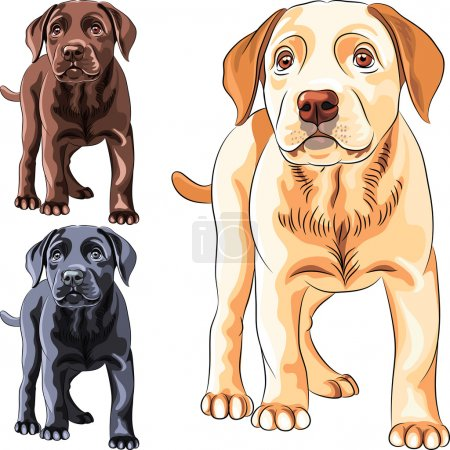 Vector set puppy dog breed Labrador Retriever