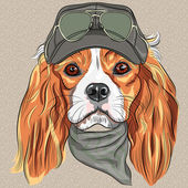 Hipster red dog Cavalier King Charles Spaniel breed in cap and cravat khakis and glasses