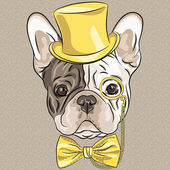 Hipster dog French Bulldog breed in a gold hat glasses and bow tie