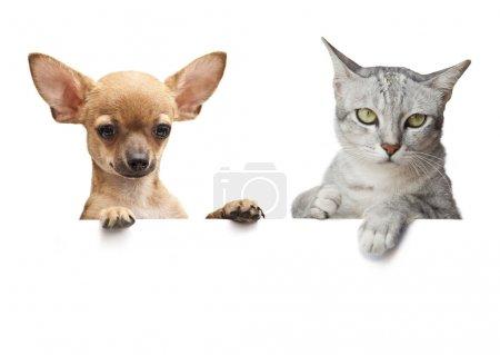Photo pour Bannière pour chien et chat sur blanc - image libre de droit