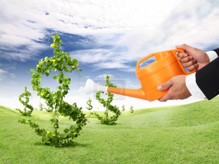 Photo for Money plant and orange watering can - Royalty Free Image