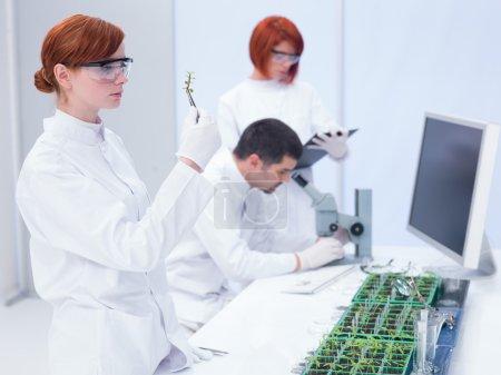 laboratory plant study