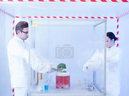 experimenting with vegtables in the sterile chamber