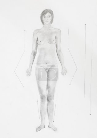 Anatomy pencil drawing