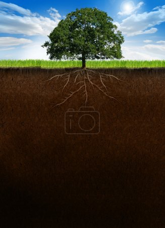 Tree with roots on cross-section ground