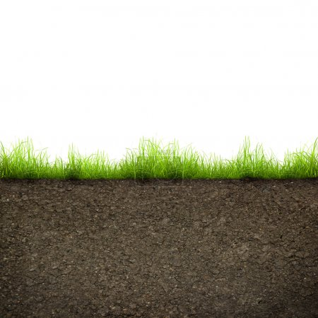Photo for Green grass with in soil isolated on white background - Royalty Free Image