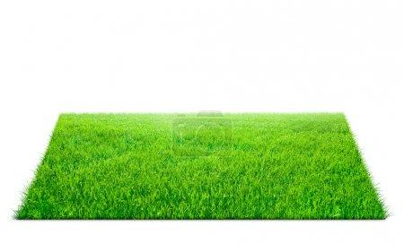 Photo pour Carré de champ d'herbe verte sur fond blanc - image libre de droit