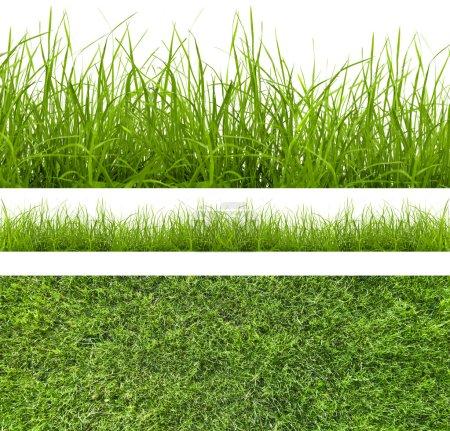 Photo pour Herbe verte isolée sur fond blanc - image libre de droit