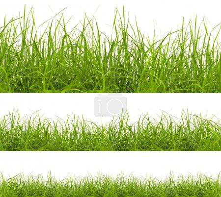 Photo pour Vert herbe isolé sur fond blanc - image libre de droit