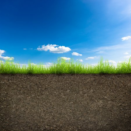 Photo for Green grass with in soil over blue sky. Environment background - Royalty Free Image
