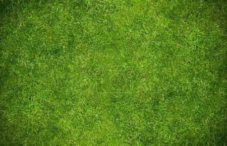 Photo pour Herbe verte fond naturel. Vue du dessus - image libre de droit
