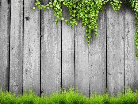 Photo pour Herbe verte printanière fraîche et plante à feuilles sur fond de clôture en bois - image libre de droit