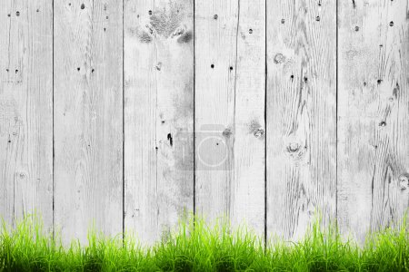 Photo for Fresh spring green grass and leaf plant over wood fence background - Royalty Free Image