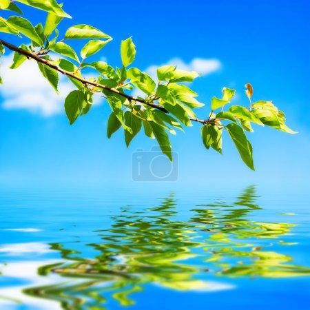 Photo pour Branche aux feuilles vertes avec reflet dans l'eau sur fond de ciel - image libre de droit