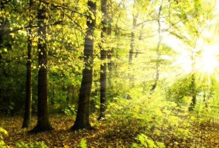Photo pour Bel lumière du soleil dans la forêt d'automne - image libre de droit