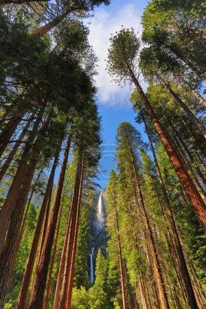 Photo pour Parc national d'Yosemite - image libre de droit