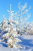 Alberi sulla collina di alba e nevoso
