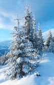 Inverno il paesaggio di montagna con alberi innevati