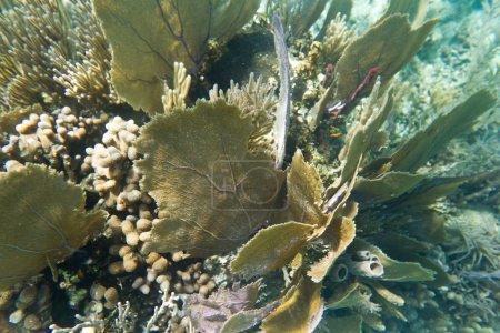 Photo pour Sous-marin près du récif corallien dans la zone tropicale du Belize - image libre de droit