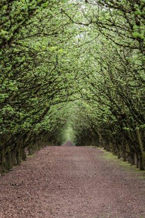 Filbert orchard