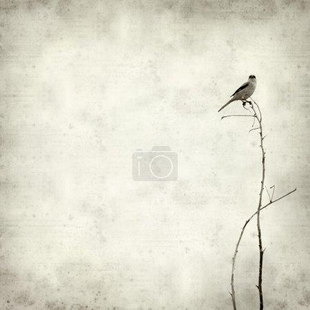 Photo pour Vieux fond de papier texturé avec petit oiseau sur un brac sec - image libre de droit