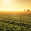 Panoramic image of a Clare Valley sunrise, Austral...