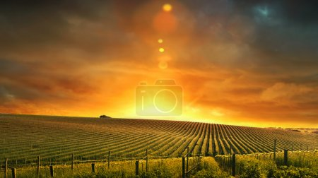 Photo for Barossa Valley, South Australia - Royalty Free Image