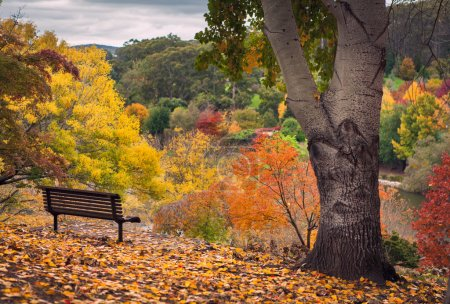 Photo for Park bench in a gorgeous Autumn Forest - Royalty Free Image