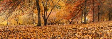 Photo for Gorgeous Autumn Scene in South Australia - Royalty Free Image