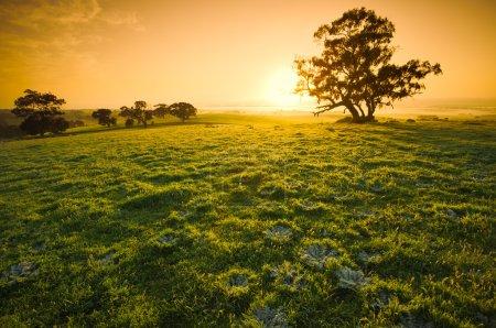Clare Sunrise