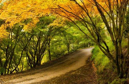 Photo for A Beautiful Peaceful Autumn Scene - Royalty Free Image
