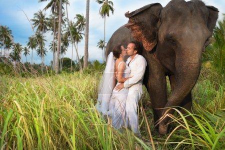 Photo for Beautiful couple with elefant inwedding dress - Royalty Free Image