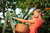 žena výdeje meruňky