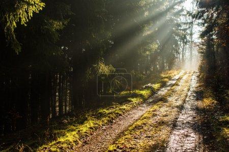 Photo pour Sentier de la forêt avec belles rayons du soleil - image libre de droit